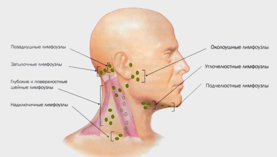 Расположение лимфоузлов около ушей