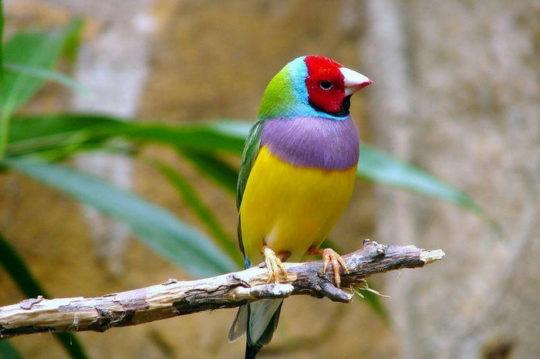 Птицы улавливают звуки не доступные уху человека