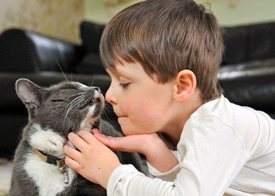 Ушная раковина человека сильно отличается от раковин животных