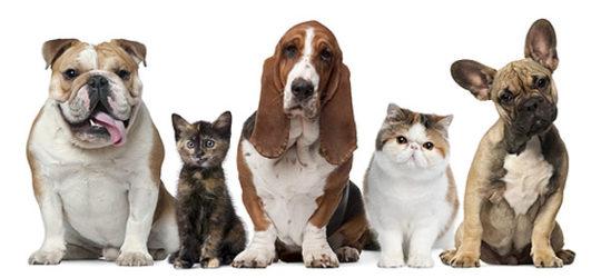 Собаки и кошки имеют схожее строение уха с людьми