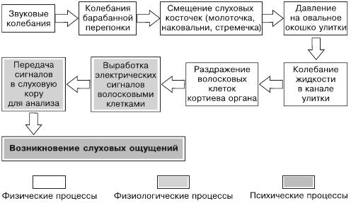Схема восприятия звуков