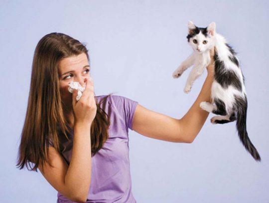 При контактном типе дерматите основным раздражителем является аллерген