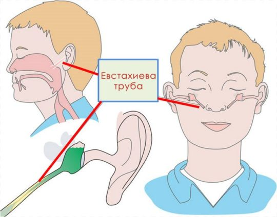 Связь уха и носа