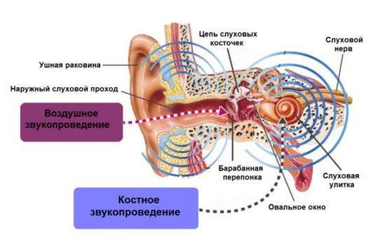 Работа слухового анализатора