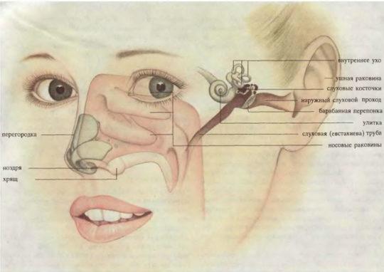 """Система """"ухо-горло-нос"""""""
