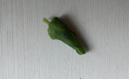 Турунда в ухо из листка герани