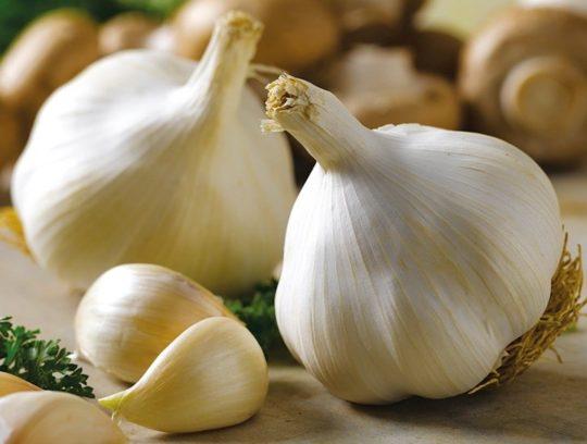 Чеснок - популярный рецепт от боли в ушах