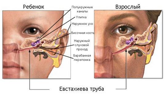 Отличие детской евстахиевой трубы от взрослой