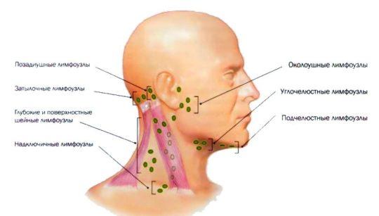 Лимфоузлы около ушей
