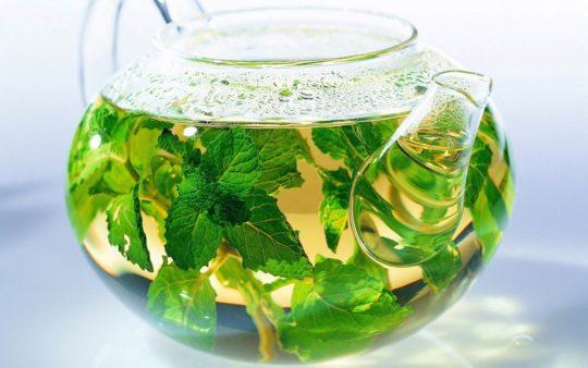 Чай из мелиссы может благотворно сказаться на здоровье ушей