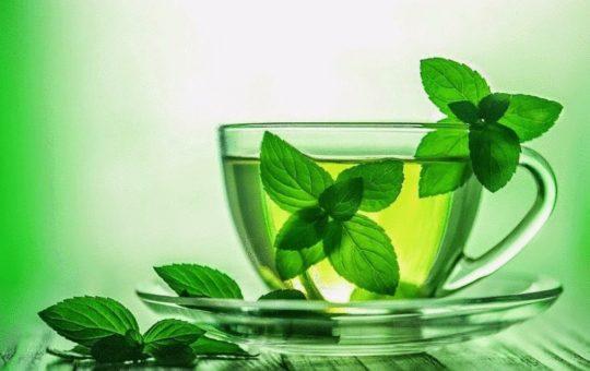Чай с мятой и зверобоем дополняет медикаментозное лечение тиннитуса
